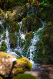 Mountain creek flowing through mossy boulders Royalty Free Stock Photo