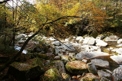 Mountain creek in forest Royalty Free Stock Images