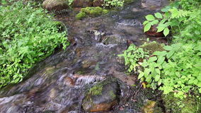 Mountain creek in a green forest stock video footage