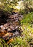 Mountain creek with little waterfall stock image