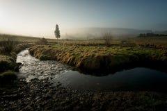 Mountain creek with morning fog Stock Photos