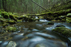 Mountain creek in the national park Stock Photography
