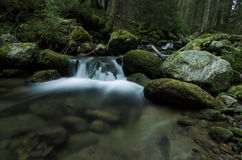 Mountain creek in the national park Royalty Free Stock Image