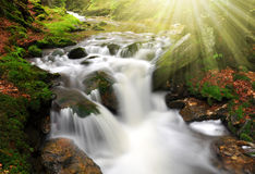 Mountain creek. In the national park Sumava-Czech Republic Stock Photos