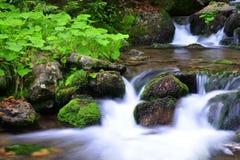 Mountain creek Stock Image