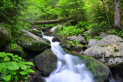 Mountain creek Stock Images
