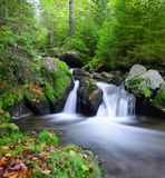 Mountain creek. In the national park Sumava-Czech Republic Royalty Free Stock Images