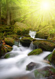 Mountain creek in the National park Sumava Royalty Free Stock Images