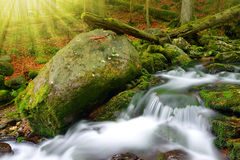 Mountain creek in the National park Sumava Royalty Free Stock Image