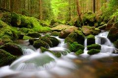 Mountain creek in the National park Sumava Stock Image