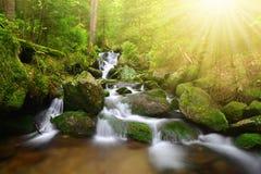Mountain creek in the National park Sumava Stock Photography