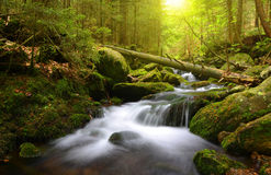 Mountain creek in the national park Sumava Stock Image