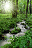 Mountain creek in the National Park Tercino valley. Mountain river with sun rays Stock Image