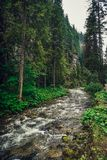 Mountain creek / river flowing between the forest. royalty free stock photography