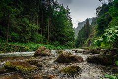 Mountain creek / river flowing between the forest. royalty free stock images