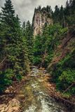 Mountain creek / river flowing between the forest. royalty free stock photos