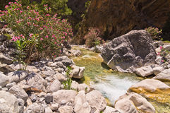 Mountain creek through Samaria gorge, island of Crete Stock Image