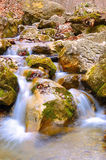 Mountain creek. Stock Image