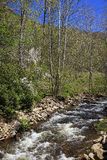 Mountain Creek in the Springtime with Dogwood Blooms Royalty Free Stock Images