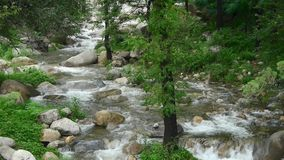 Mountain creek stream from forests & shrubs. stock video footage