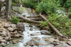 Mountain creek on a summer day in a shade of the forest. Royalty Free Stock Images
