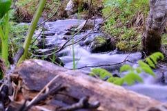 Mountain creek in summer lush green nature Royalty Free Stock Image