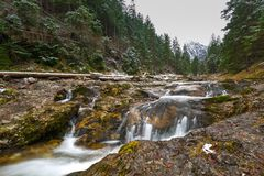 Mountain creek in Tatra mountains Stock Images