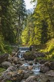 Mountain creek in the woods Royalty Free Stock Photo
