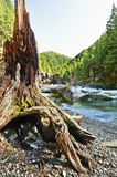 Mountain with curved driftwood tree in foreground. Mountain landscape with flowing river and curved driftwood tree in foreground royalty free stock image