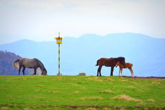 Mountain cute horses Royalty Free Stock Images