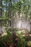 Mountain deciduous forest with sunlights and hiking trail. In Mala Fatra mountain range in Slovakia stock photo