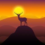 Mountain Deer Represents Wilderness Scenic Stock Photo