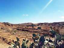 Mountain and desert with cactus in the foreground Royalty Free Stock Image