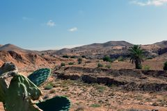 Mountain and desert with cactus in the foreground. Matmata Tunisia Africa royalty free stock photography
