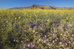 Mountain and  desert gold Stock Photos