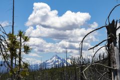 Mountain in the distance with burned trees in the foreground stock photos
