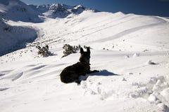 Mountain dog. Stock Photo