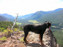 Mountain Dog. Tanker the Rottweiler on top of a mountain Stock Image