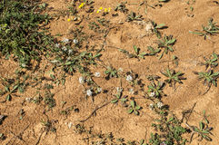 Mountain dry soil with small flower Stock Photography