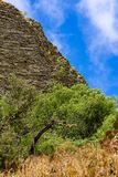 Mountain edge in front of a blue sky, grass and green trees in the foreground. Gran Canaria Stock Photography