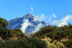 Shrubs and volcano from a distance  Stock Photos