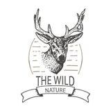 Mountain elk Stock Photo