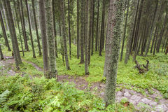 Empty mountain path - Tatra, Poland. Royalty Free Stock Photography