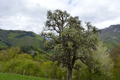 Mountain environment Stock Photo