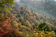 Mountain with fall autumn colors trees - gold, orange, red and g. Reen in China stock image