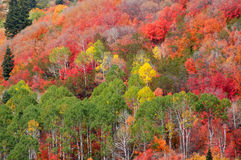 Mountain fall colors. Utah stock photos