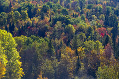 Mountain Fall Foliage Royalty Free Stock Photos
