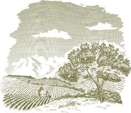 Mountain Farm Field Drawing. Pen and ink drawing of a farm field with mountains in the background Royalty Free Stock Photo