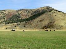 Mountain Farm. Near Mantua, Utah stock photography