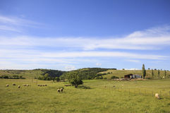 Mountain farm with sheeps Stock Images